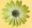 4 éme chakra du coeur nommé Anahata