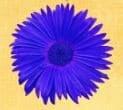 5 éme chakra de la gorge nommé Vishuddi Luminotherapie-formation.com Martine Roux