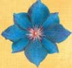 6 éme chakra du 3 éme Œil nommé Ajna