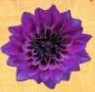 7 éme chakra couronne nommé sahasrara