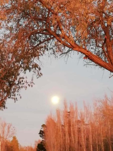 Photo de la dépression saisonnière www.luminotherapie-formation.com Martine Roux