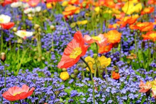 C'est le printemps ! www.luminotherapie-formation.com Marine Roux